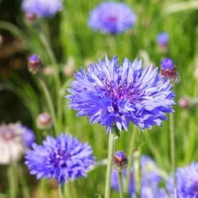 Gewürze und Blüten